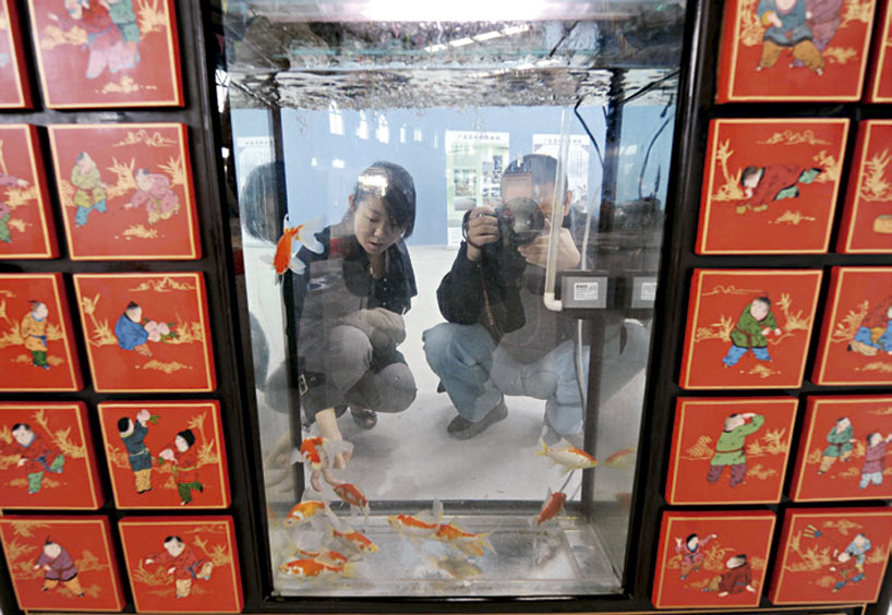Goldfish Museum - Exotic Chinese museums